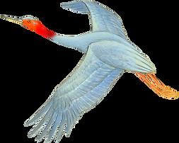 sarus crane1.png
