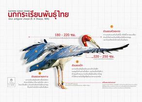 นกกระเรียน(Sarus Crane)