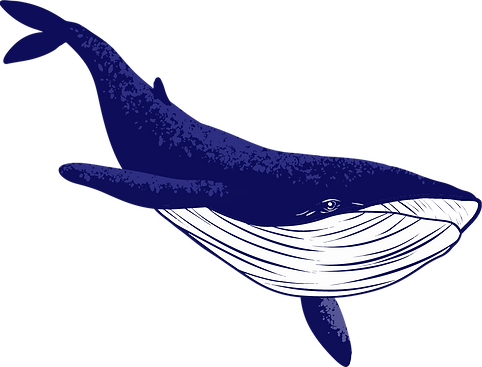 whale2_edited.png