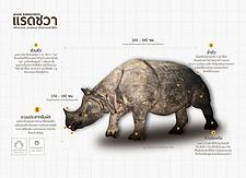 แรดชวา Javan Rhinoceros