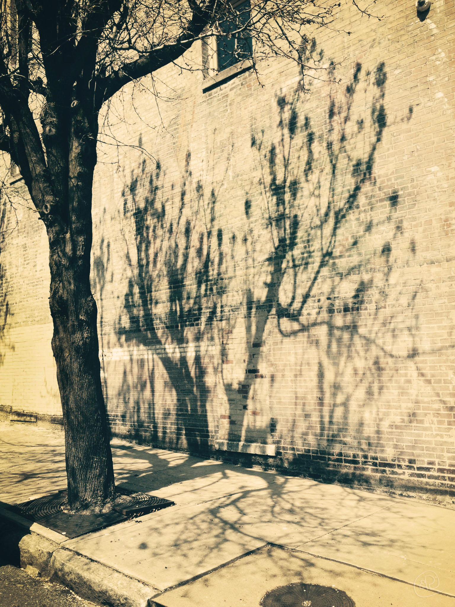 Memphis Wall WM.jpg