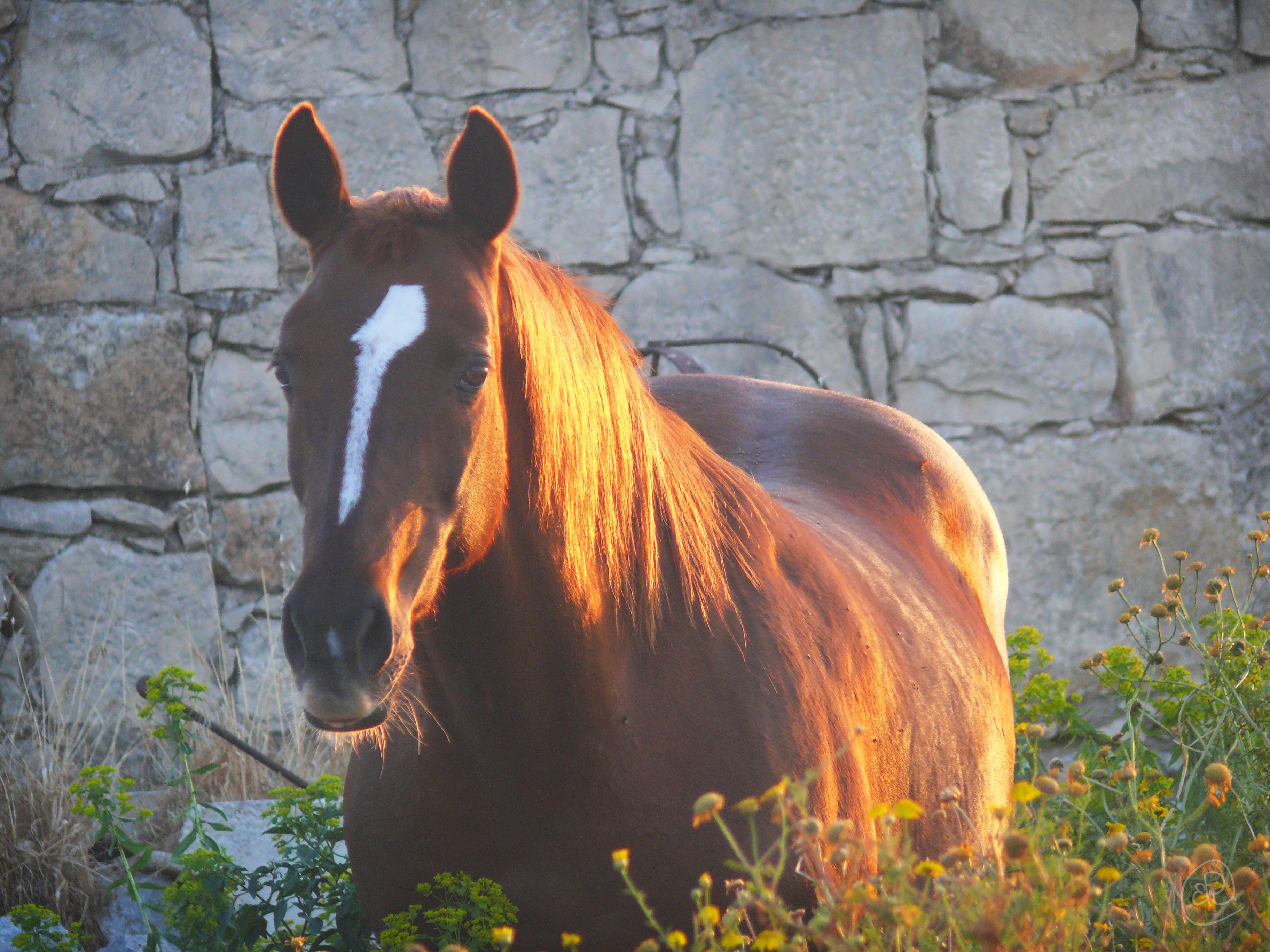 Horse WM.jpg