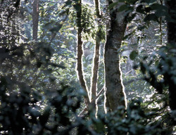 Jungle WM.jpg