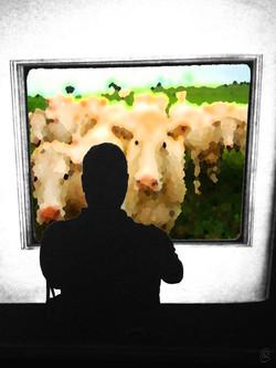 VT cows.jpg