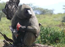Monkey w birdPS.jpg