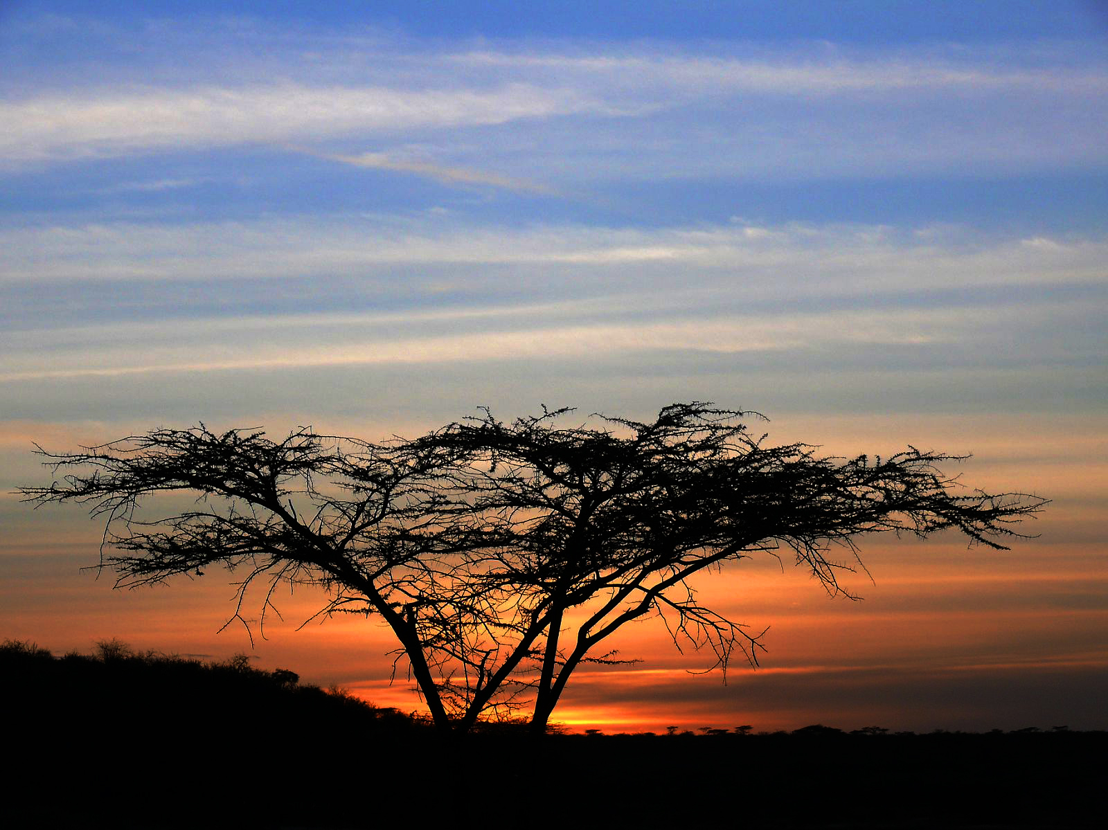 Tree at sunset2.jpg