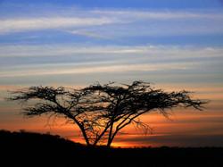 Tree at sunset2.jpg