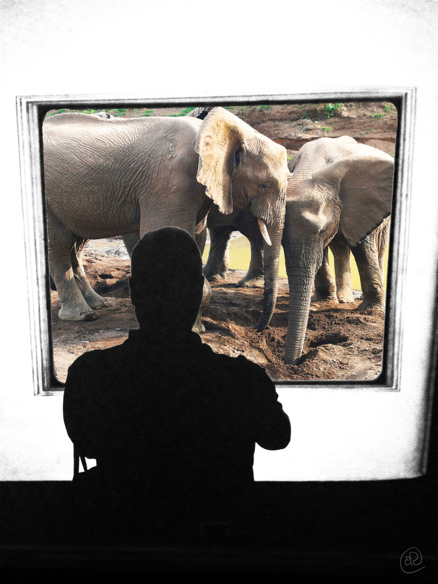 Selfie with Elephants.jpg
