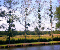 Trees by the Canal WM.jpg