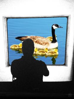 VT Geese.jpg