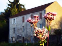 French Canal flower WM.jpg