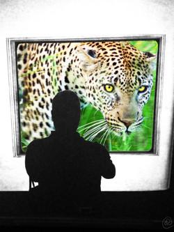 VT Leopard.jpg
