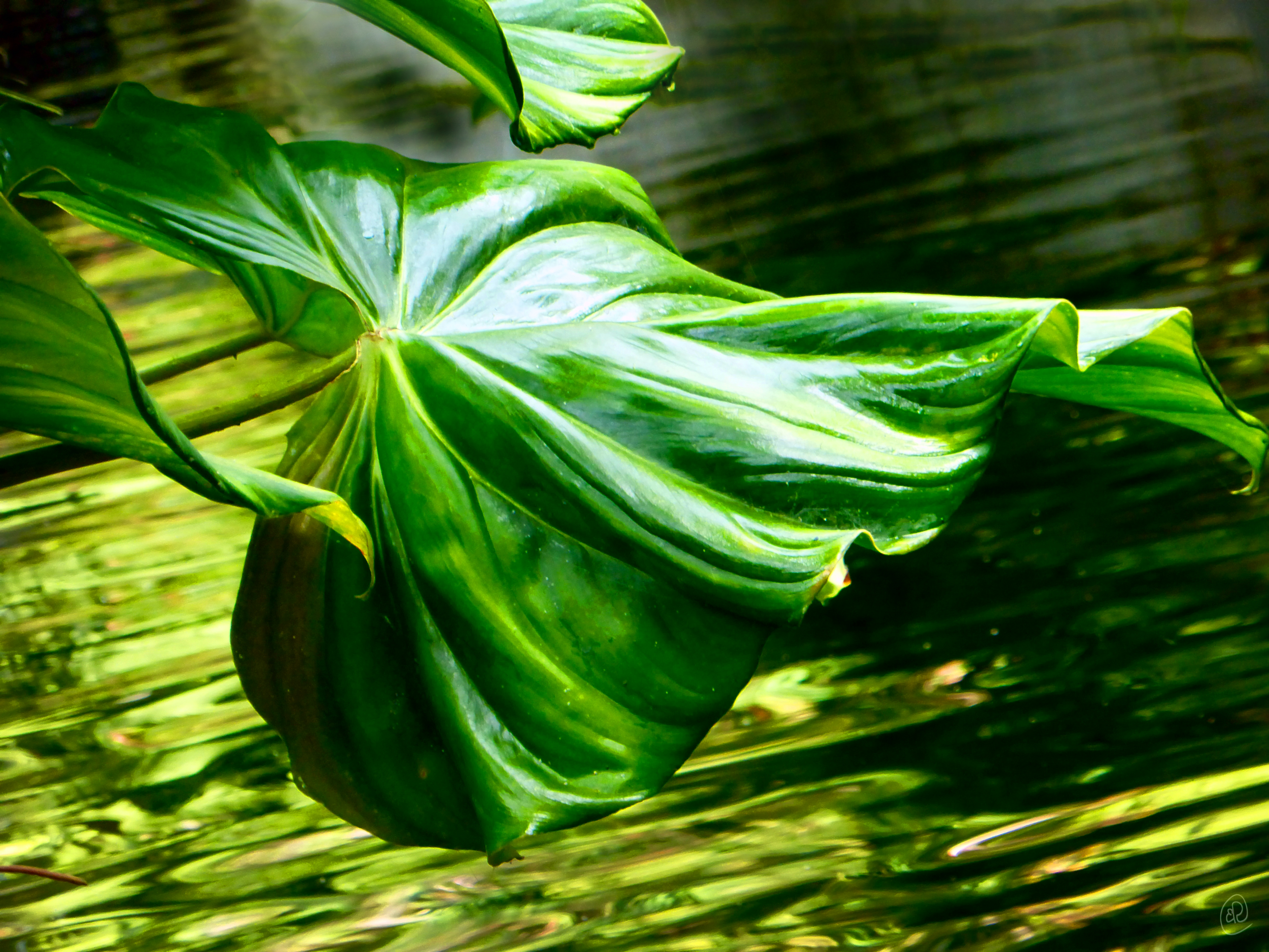 Leaf over water.jpg
