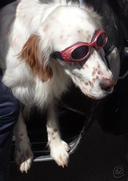 Dog with goggles WM.jpg