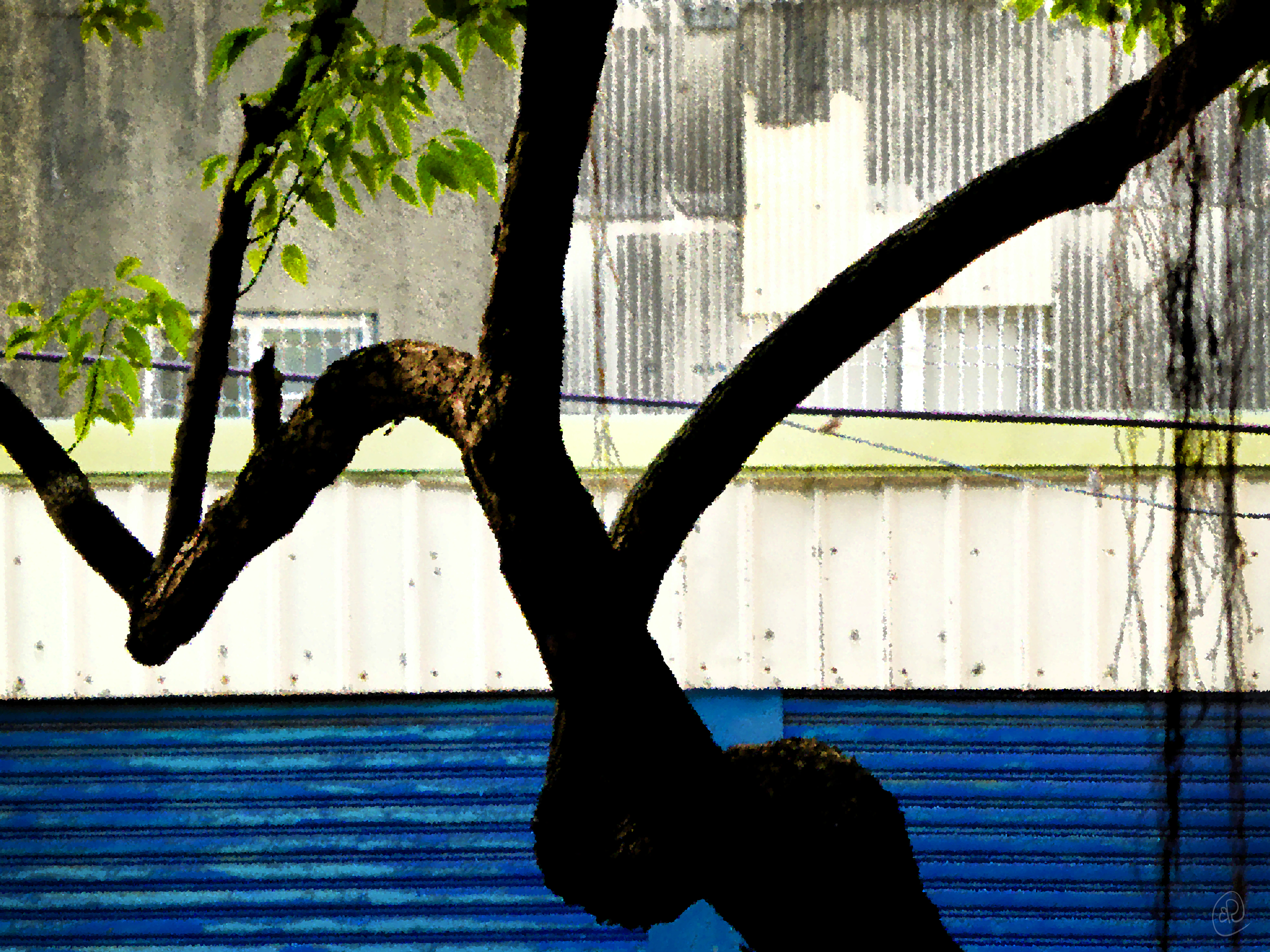 Tree with Blue.jpg
