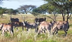 Herd of DeerPS.jpg