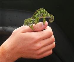 Chameleon WM.jpg