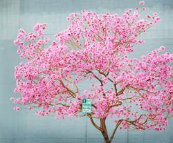 LA in bloom.jpg