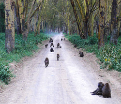 Monkeys on Road WM.jpg
