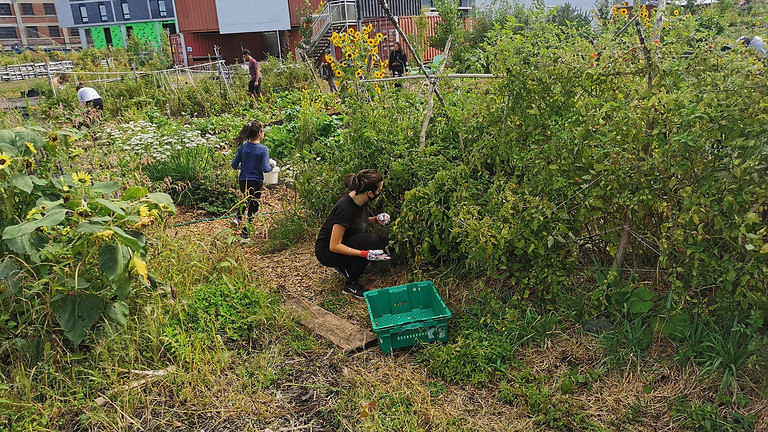 Jardinage avec Cra-Terre - 14 Août