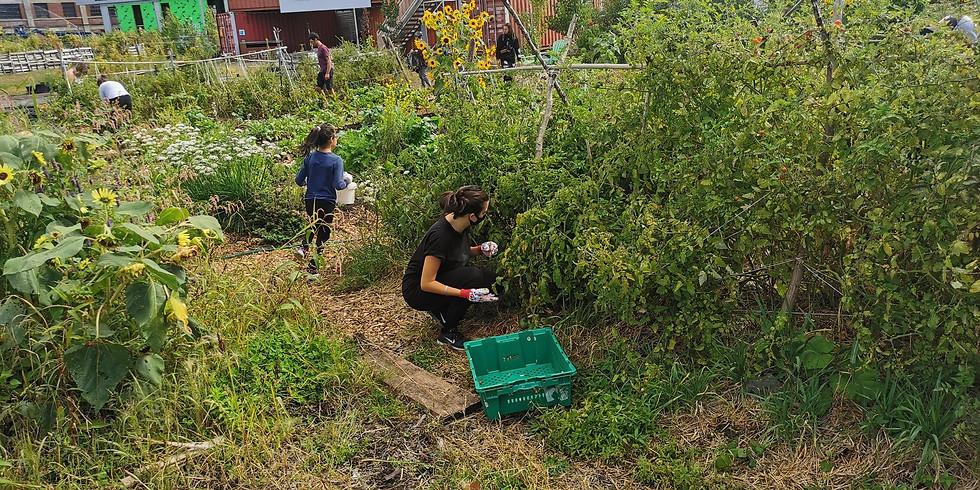 Jardinage avec Cra-Terre - 31 Juillet