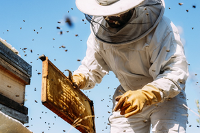 The World Bee Project Utilises Oracle Cloud to Avoid a Sting in the Tail for Humanity