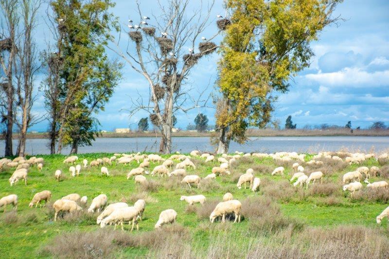 Guadalquivir ovce štorklje Potujoči brlog