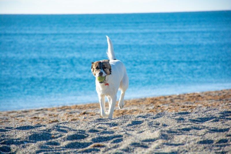 Šnofka teče po plaži Potujoči brlog