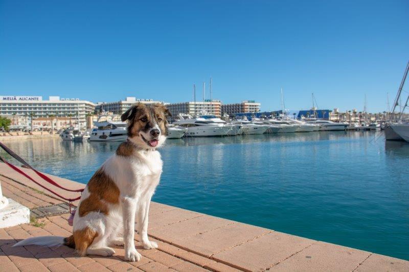 Marina Alicante potujoči brlog