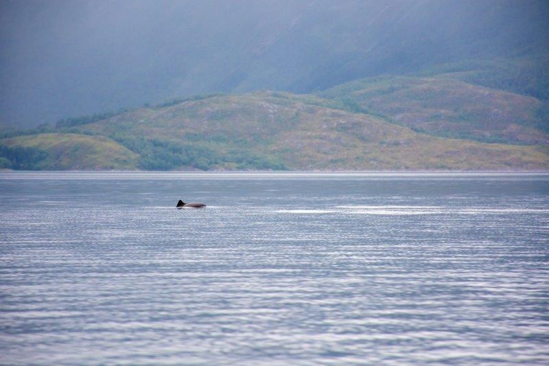 Delfini Potujoči brlog