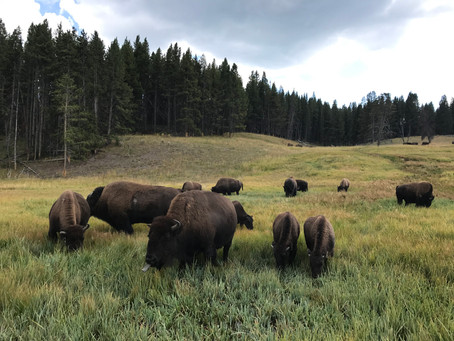 Trip Report: Yellowstone National Park