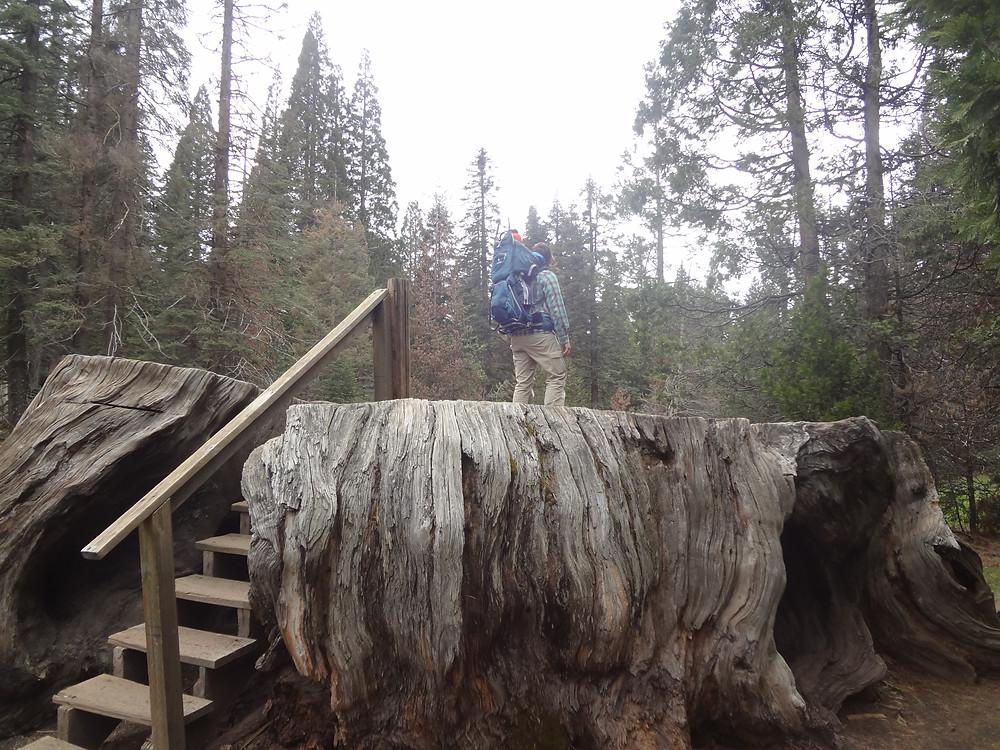 Big Stump Trail, Kings Canyon National Park