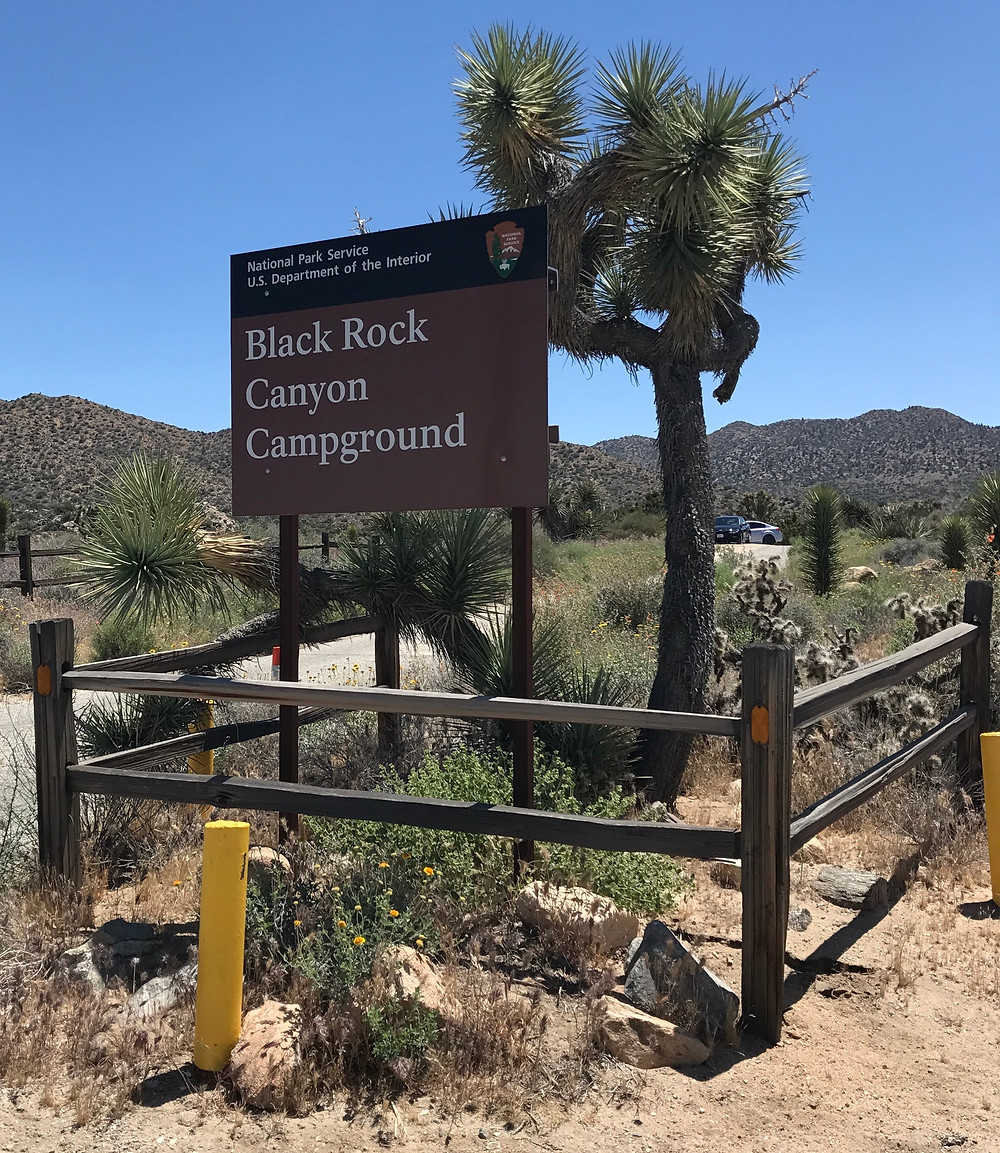 Sing for Black Rock Canyon Campground, Joshua Tree National Park