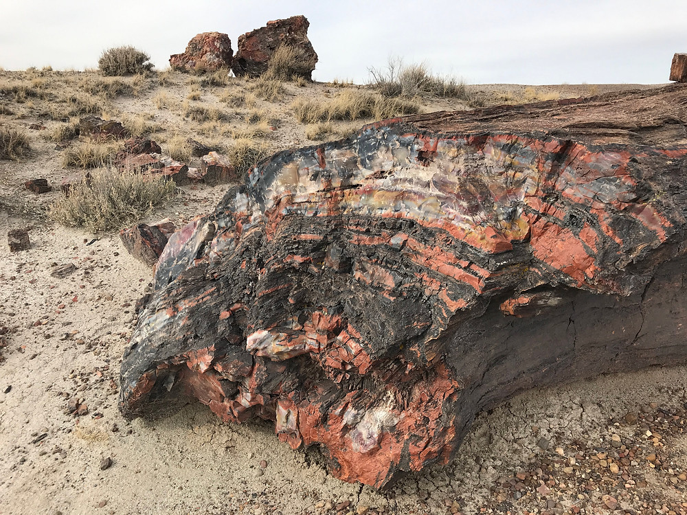 Petrified wood in the Crystal Forest, Petrified Forest National Park