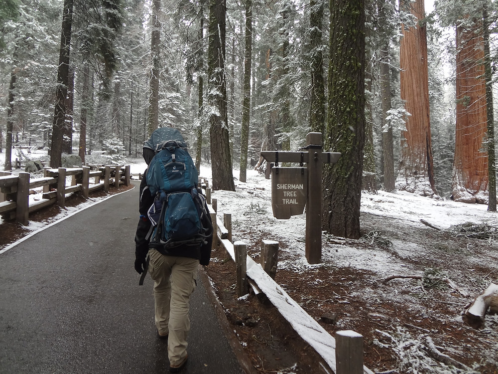 Sherman Tree Trail, Sequoia National Park