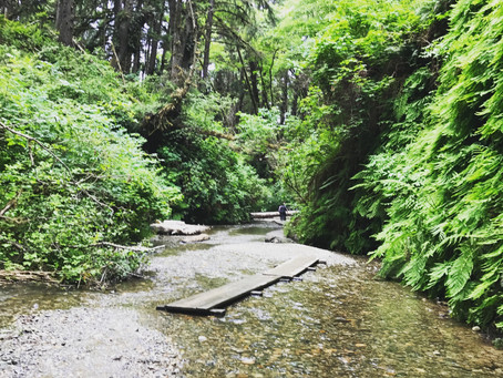 Trip Report: Redwoods State and National Parks