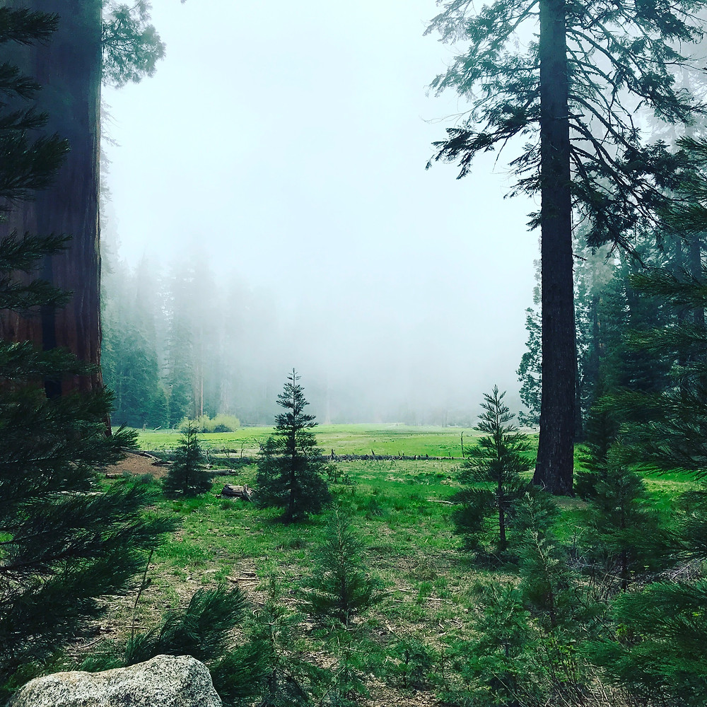 Big Tree Trail, Sequoia National Park