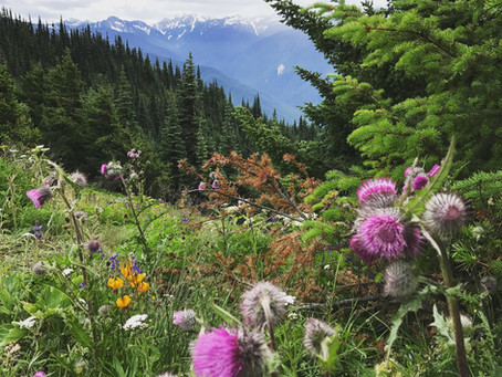 Trip Report: Olympic National Park