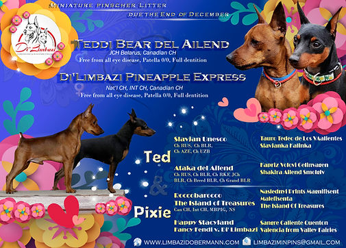 Ted & Pixie.jpg