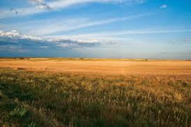 prairie.jpeg
