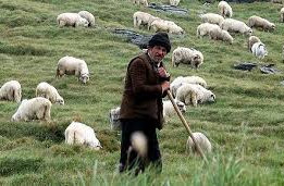 Shepherds in our Midst