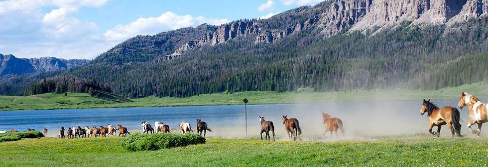 Horses running -ç