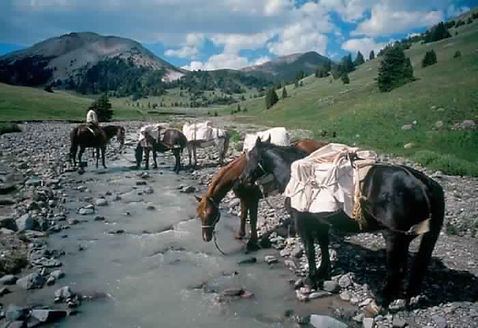 Horses stop to drink from a river at Brooks Lake Lodge, an all-inclusive luxury resort near Yellowstone