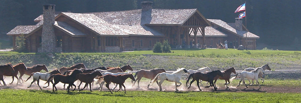 Horses running at Brooks Lake Lodge, an all-inclusive luxury resort near Yellowstone