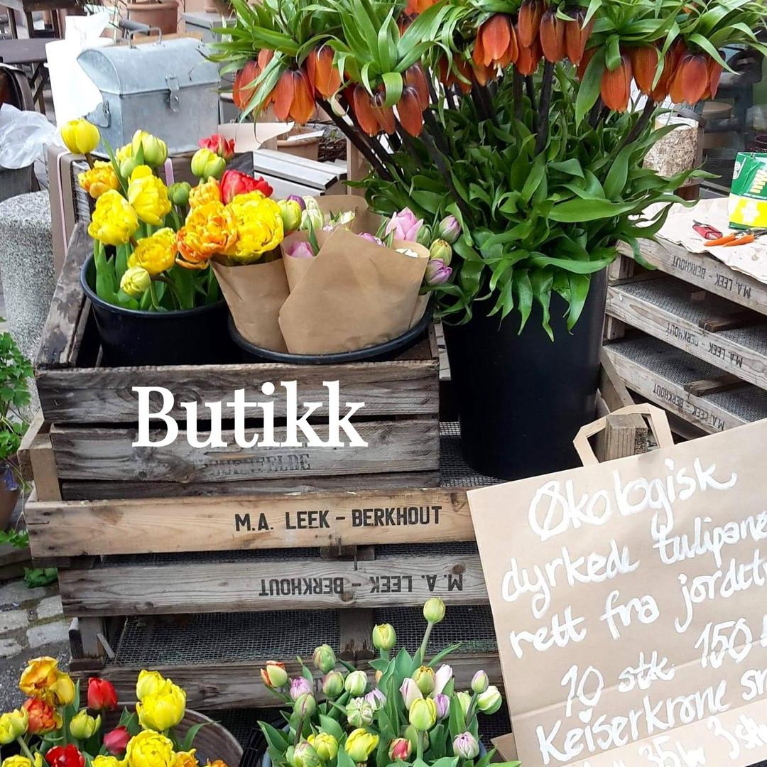 tulipaner_edited.jpg