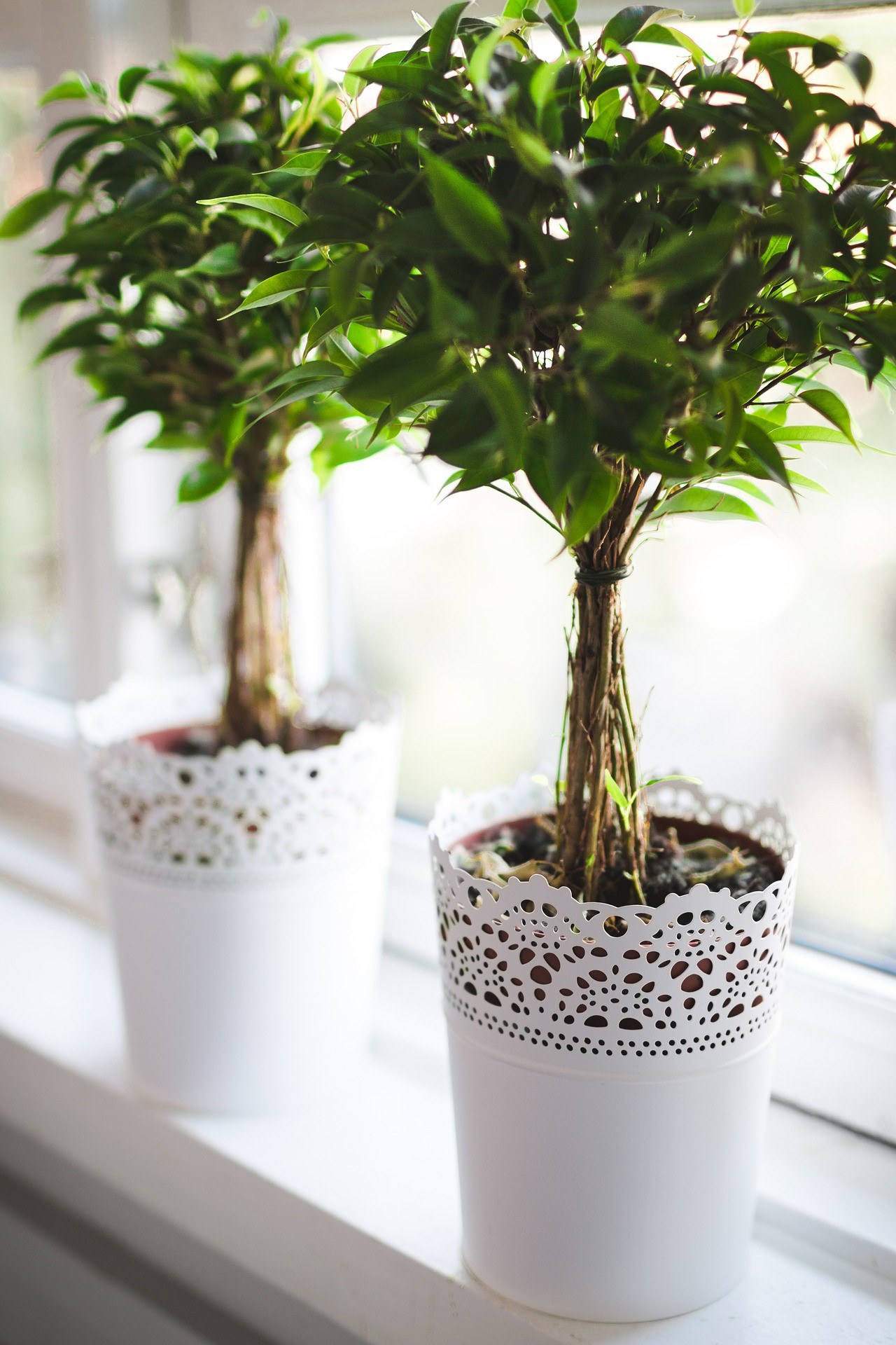 Custom Seasonal Planters