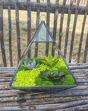 green succulent.jpg