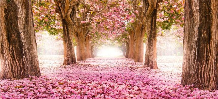 floresta encantada.jpg