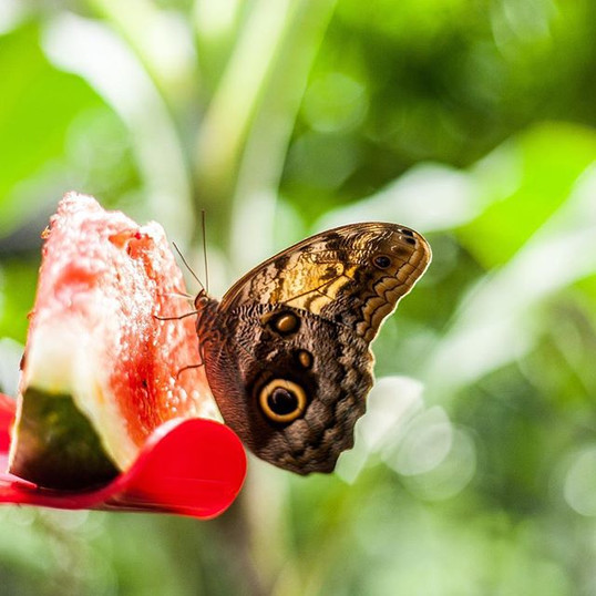 Mariposa in Botanical Gardens