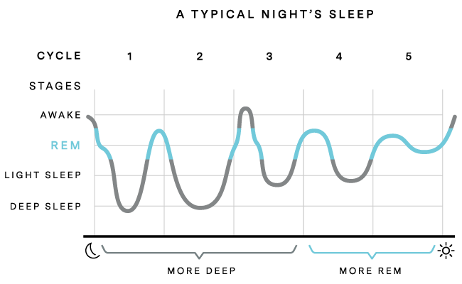 a graph about sleep cycle